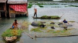 Trái đất tăng 4 độ C, Việt Nam thiệt hại đủ đường