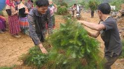 Than Uyên  giữ rừng để làm giàu