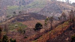 Lâm Đồng: Phá gần 4ha rừng, bị phạt 30 triệu đồng