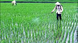 Thời tiết nông vụ miền Trung và Tây nguyên: Chuột tiếp tục gây hại