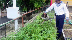 Chuyển giao kỹ thuật trồng rong nho biển