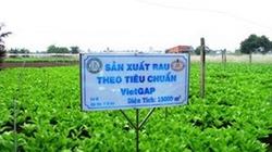 TP.HCM: Đôn đốc tiêu thụ nông sản VietGAP