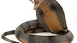 """Bí ẩn phép chữa rắn cắn của """"cao nhân'' Mường"""