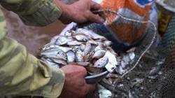 Tấp nập chợ cá bến Giao Hải
