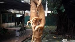 Ăn nhầm rễ cây độc vì tưởng sâm, một gia đình nhập viện