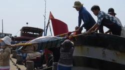 Nâng đẳng cấp  cho cá ngừ Việt Nam