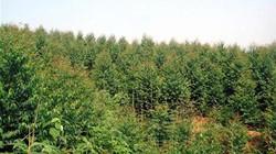 Mở đường lâm sinh để phát triển kinh tế rừng