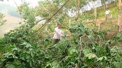 Mưa đá, gió lốc ở Lai Châu: Thiệt hại hàng trăm triệu
