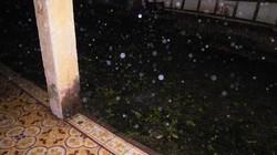 Lào Cai: Mưa đá, gió lốc gây thiệt hại nặng