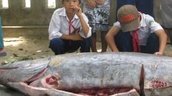 """Phú Yên: Bắt được cá """"lạ"""" nặng hơn 2 tạ"""