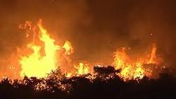 Khánh Hòa: 100ha rừng trồng bốc cháy dữ dội