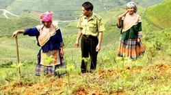 Lào Cai: Hỗ trợ hơn 4 tỷ đồng trồng rừng