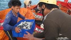 Sửa đổi chính sách, phương thức hỗ trợ ngư dân