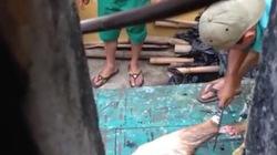 Vụ mổ thịt nai chia nhau ở Đà Nẵng: Phó giám đốc công ty bị khiển trách
