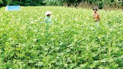 Chuyển 112.000ha đất lúa sang trồng màu