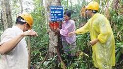 Quảng Nam: 13,4 tỷ đồng khoán bảo vệ rừng