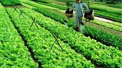 Lâm Đồng: Không phát hiện mẫu rau nhiễm độc