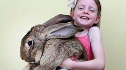 Con thỏ khổng lồ, nặng kỷ lục thế giới lộ diện