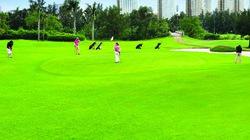 Giải golf Phú Mỹ Hưng 2014: Kết nối cộng đồng doanh nhân