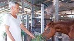 Thế giới ngựa đua Sài Gòn