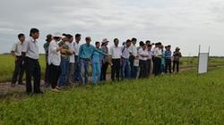 Thái Bình: Trồng lúa giảm khí thải nhà kính