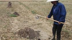 Đà Nẵng,  Quảng Nam:  Nóng việc lo nước cho vụ hè thu
