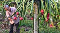 Làm ăn lớn từ vốn Quỹ Hỗ trợ nông dân
