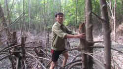 Cùng dân cứu  những khu rừng bị tàn phá