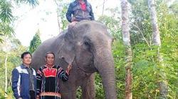 Lên Tây Nguyên nghe  quản tượng kể chuyện voi...