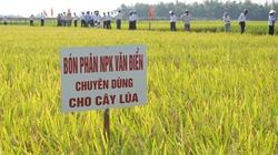 Phân bón Văn Điển  và đồng ruộng Việt Nam