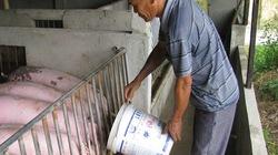 Tham gia Hiệp định TPP: Cần bắt tay chăn nuôi theo chuỗi
