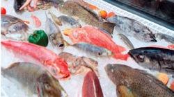 Cá tươi trên mạng: Liệu có an toàn hơn?