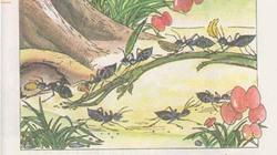 Hình minh họa trong sách Tiếng Việt 1 dễ gây hiểu nhầm