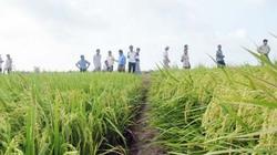 Doanh nghiệp thép, thuỷ sản đi 'buôn'... lúa gạo