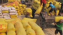 Giải ngân hơn 7.300 tỷ đồng thu mua tạm trữ lúa gạo