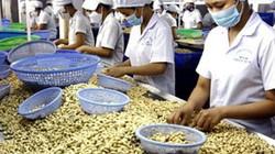 Dự báo xuất khẩu 180.000 tấn điều nhân