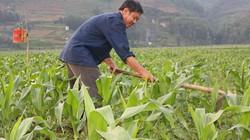 Xoá nghèo cho đồng bào Mông: Chọn mô hình điểm làm động lực