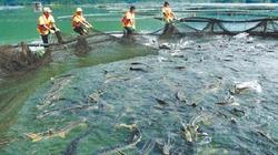 Lâm Đồng: Cấp chứng nhận cho dự án nuôi cá nước lạnh