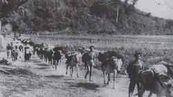Đại đội ngựa thồ phục vụ chiến dịch