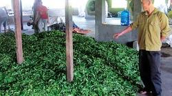 Cảnh báo cho trà Việt Nam