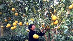 Đào tạo nghề cho lao động nông thôn: Chọn mỗi địa phương từ 1-3 cây, con đặc sản