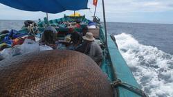 Ngư dân Việt thẳng tiến Hoàng Sa