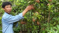 Bảo hộ nhãn hiệu nông sản trên địa bàn Hà Nội