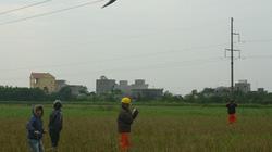 Hải Phòng: Lưới điện liên tục gặp sự cố do diều
