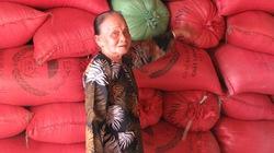 Tiếp tục thu mua lúa Nàng thơm Chợ Đào trong 4 ngày