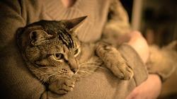 Nhật Bản: Tìm thấy con mèo bị mất tích sau trận động đất, sóng thần