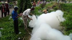 Tây Ninh: Bọt tuyết phun trắng xóa, cá chết hàng loạt