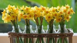 6 loại hoa nên trồng để tài lộc vào nhà