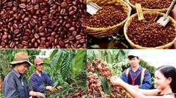 Tây Nguyên phấn đấu đạt 1,2 triệu tấn cà phê