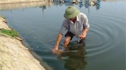 Hà Tĩnh: Xuất hiện dịch đốm trắng ở tôm